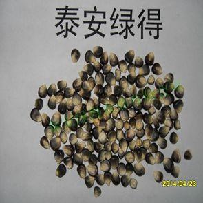 有机黑玉米