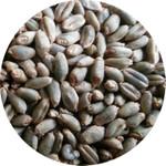 有机绿小麦原粮